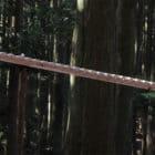 Giant Wooden Xylophone