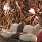 NEW Hotel by Campana Brothers (5)