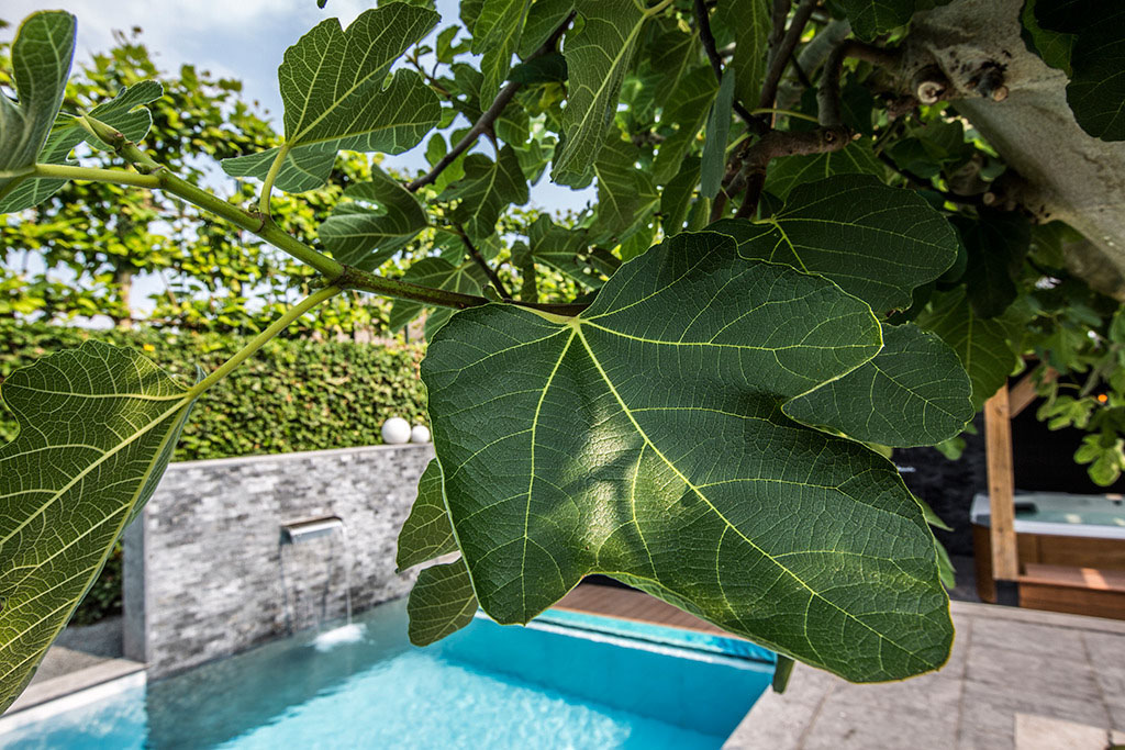 Aquatic Backyard by Centric Design Group (6)