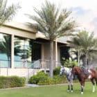 Desert Palm Dubai (2)
