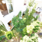 Forest House in the City by Studio Velocity (2)