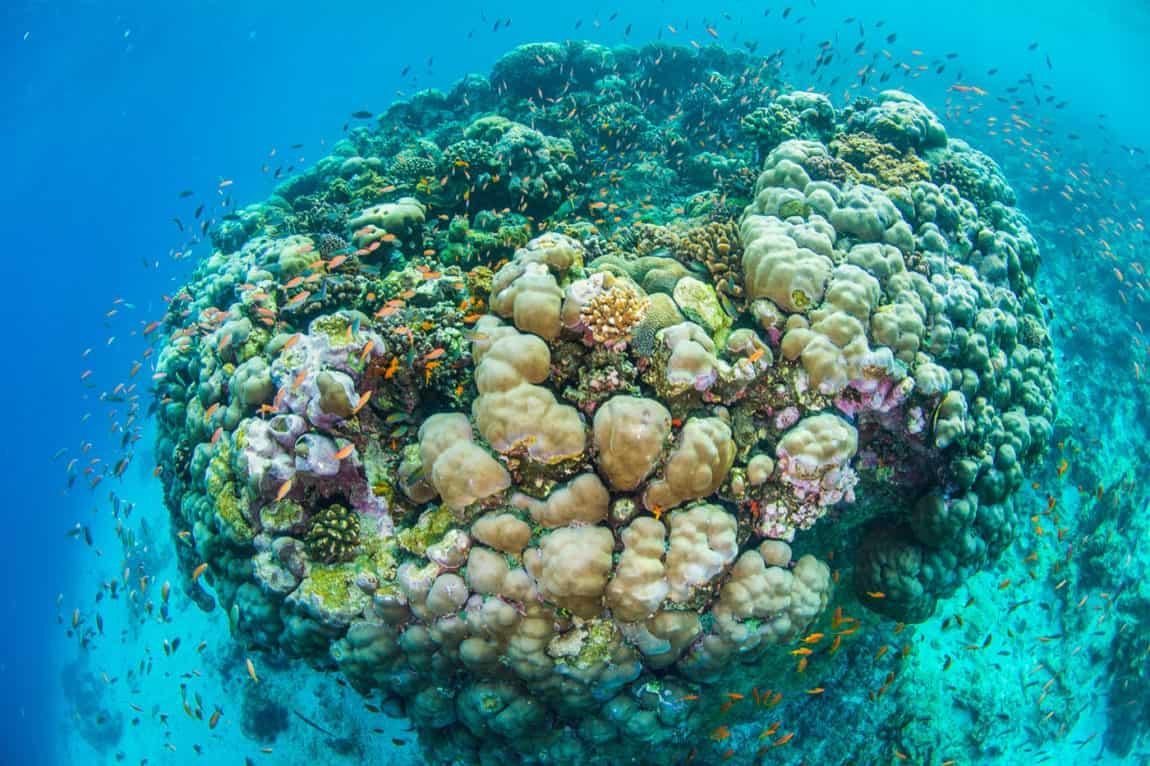 The Manta Underwater Room by Genberg Underwater Hotels (8)
