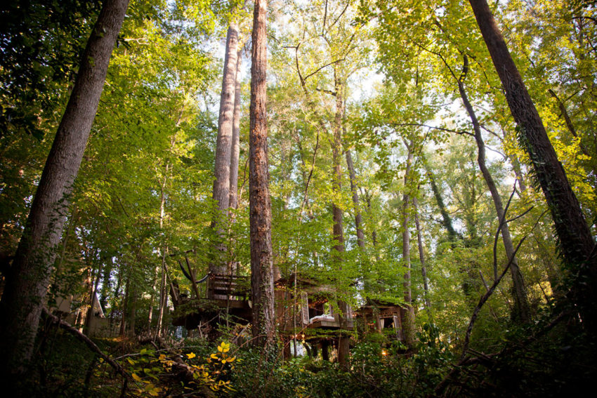 Secluded Intown Treehouse (1)