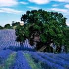 Suite Blue by La Cabane Perchée (1)