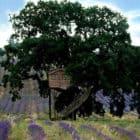 Suite Blue by La Cabane Perchée (2)