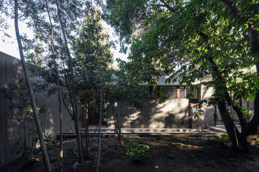 The House and the Trees by Iglesis Arquitectos (2)