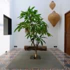 House in Goa by Ankit Prabhudessai (11)