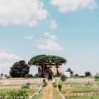 Masseria Moroseta by Andrew Trotter Studio (1)