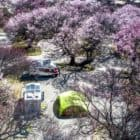 Sanzee Rv Self-driving Campsite campsite and blooming trees